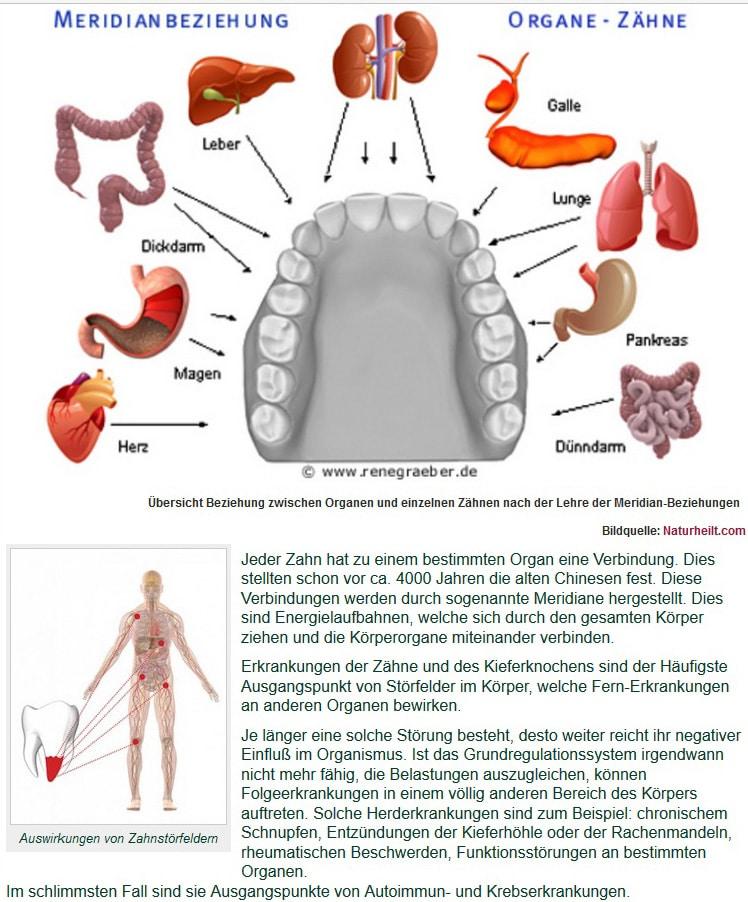 Organ Zähne